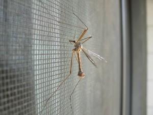 moskitiery Velum